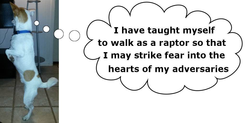 I have taught myself to walk as a raptor...